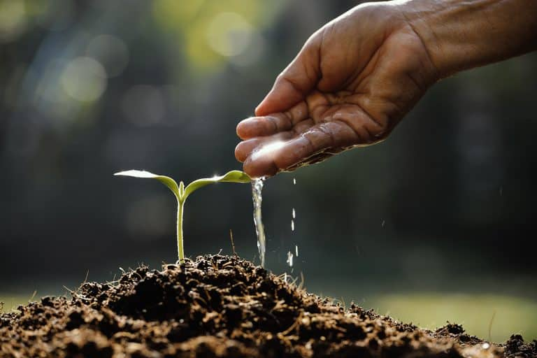 Hand watering young plant